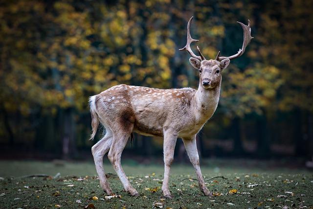 Nature, Roe Deer, Forest, Fallow Deer, Scheu, Hirsch