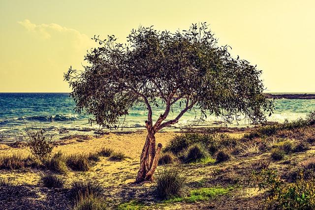 Tree, Sea, Beach, Nature, Scenery, Makronissos, Cyprus