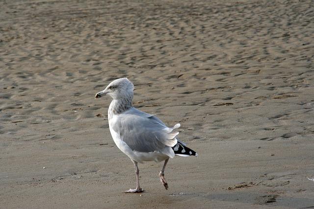 Bird, Body Of Water, Sea, Nature, Beach