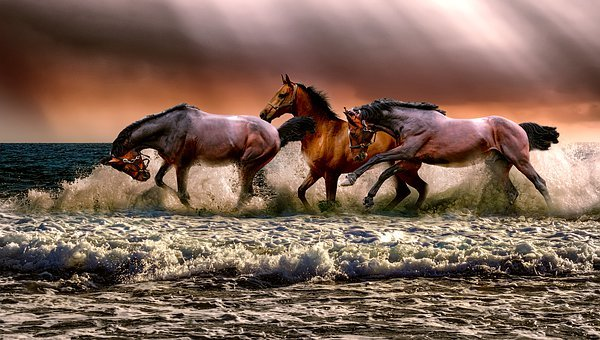Animal, Horses, Fauna, Nature, Cavalry, Sea