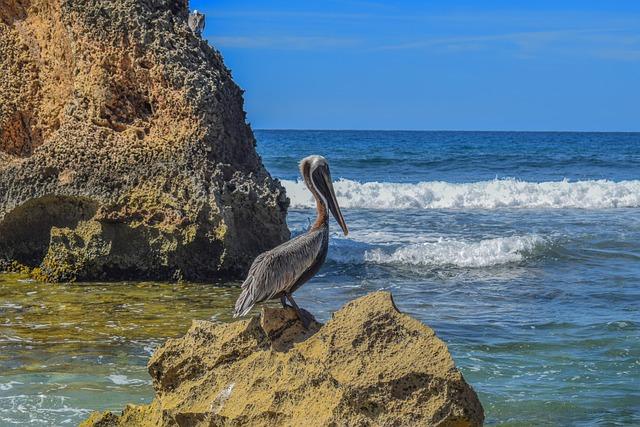 Water, Sea, Ocean, Nature, Seashore