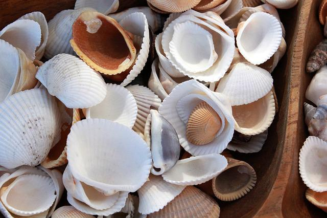 Shell, Shells, Seashell, Ocean, Nature, Sea Shell
