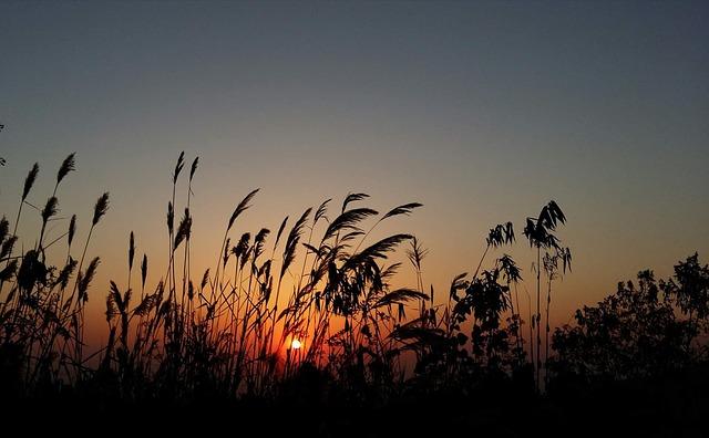 Sunset, Silhouette, Sun, Nature, Sky
