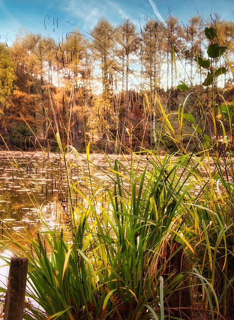Forest, Lake, Autumn, Nature, Landscape, Trees, Sky