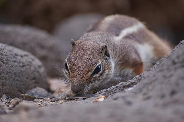 Nature, Animal World, Animal, Small, Rodent, Gophers