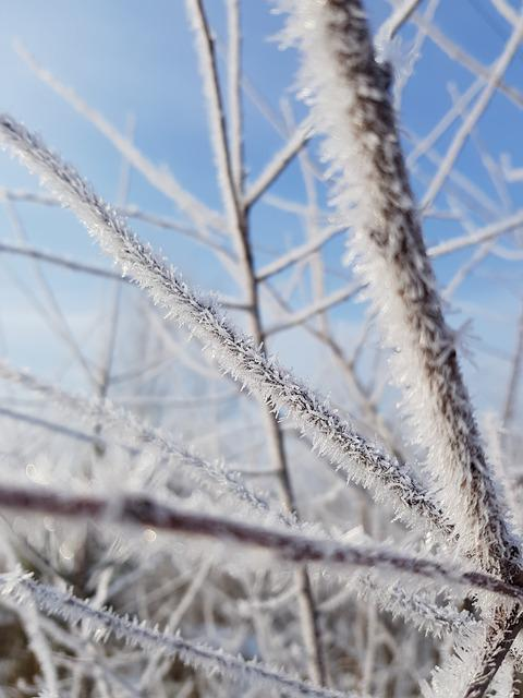 Nature, Frost, Outdoors, Winter, Sky, Snow, Sharp, Tree