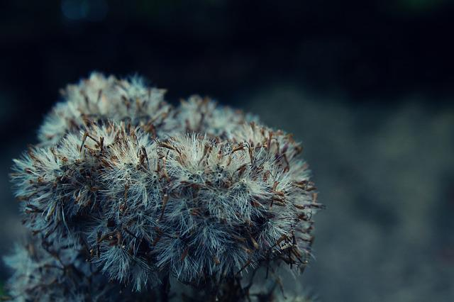 Plant, Fluffy, Nature, Close, Soft, Seeds, Blossom