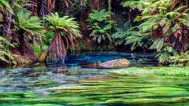 Waters, Nature, Summer, Tree, Tropical, Source