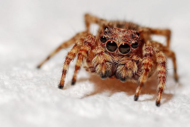 Spider, Macro, Insect, Arachnid, Nature, Small, Animal