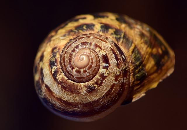 Shell, Spiral, Nature, Close, Housing, Decorative