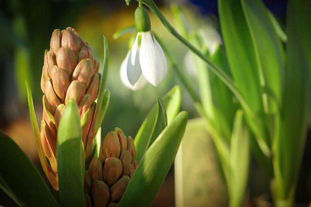 Plant, Nature, Leaf, Flower, Growth, Bloom, Bud, Spring