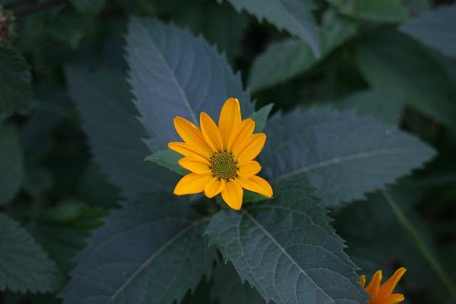 Flower, Macro, Spring Flower, Macro Photography, Nature