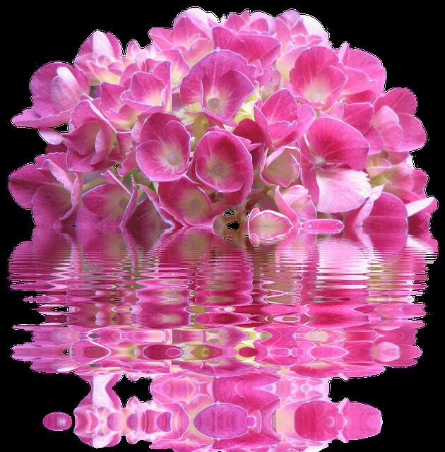 Spring, Hydrangea, Nature, Garden, Plant, Flora, Bloom