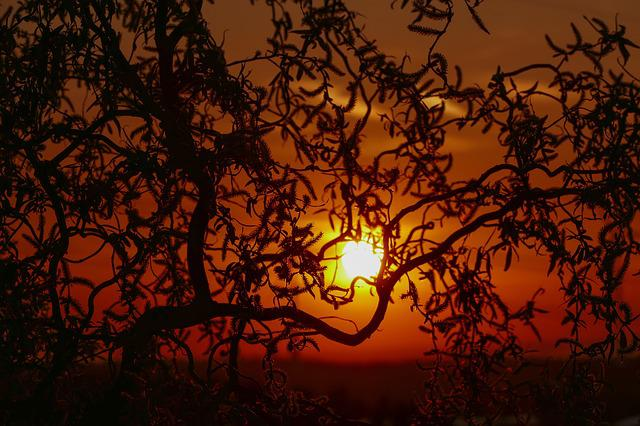 Sunset, Silhouette, Tree, Nature, Spring, Summer