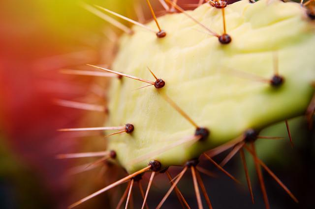 Cactus, Spur, Nature, Plant, Thorns, Prickly, Green