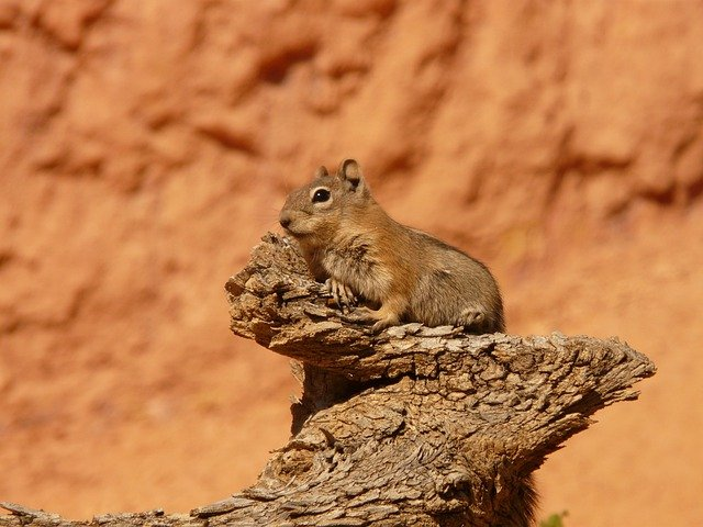 Nature, Animal, Squirrel