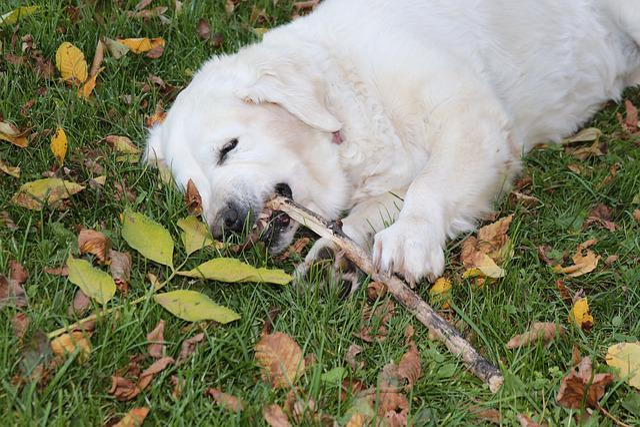 Dog, Floor, Nibble, Animal, Nature, Pet, Stock Pick