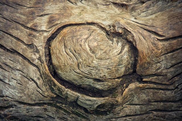 Tree, Tree Bark, Log, Tribe, Nature, Bark, Structure