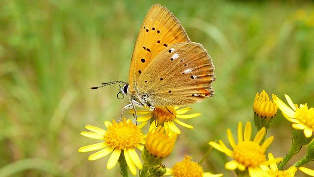 Nature, Insect, Summer, Flower, Plant, Butterfly Day