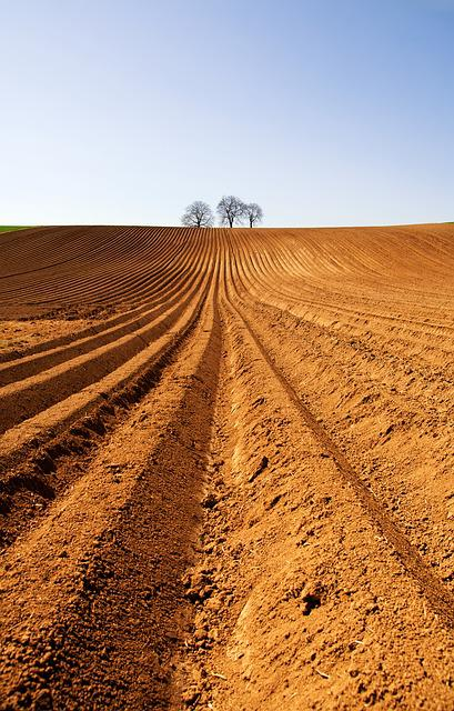 Arable, Agriculture, Field, Summer, Nature, Ground