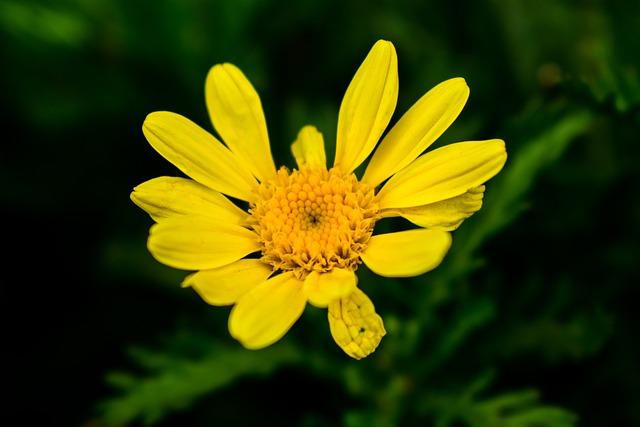 Nature, Plant, Summer, Flower