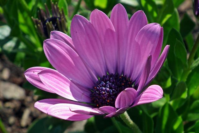 Nature, Plant, Flower, Summer, Garden, Closeup