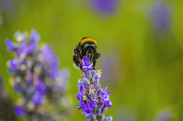 Nature, Flower, Outdoors, Summer, Flora, Bee, Insect