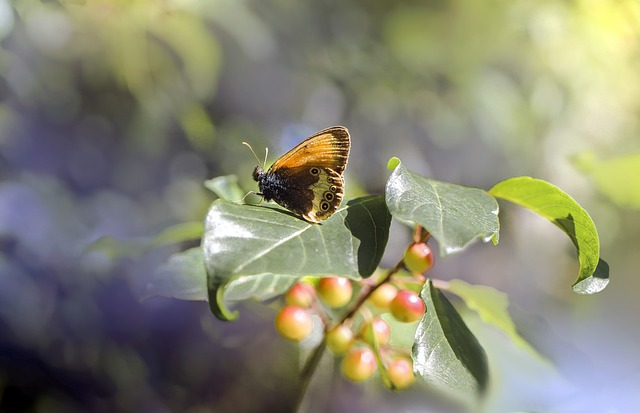 Butterfly, Insect, Leaf, Nature, Macro, Summer, Wings