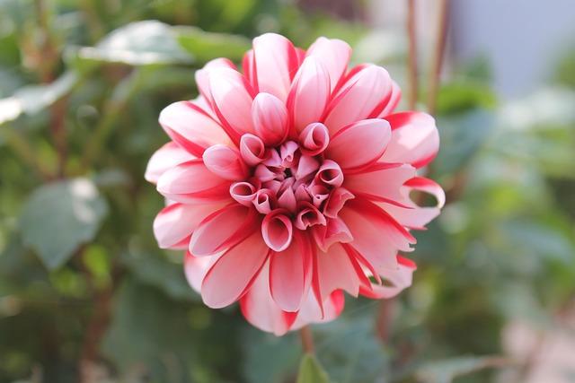 Nature, Flower, Plant, Garden, Summer, Flowers, Blossom