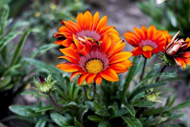 Nature, Plant, Flower, Summer, Garden