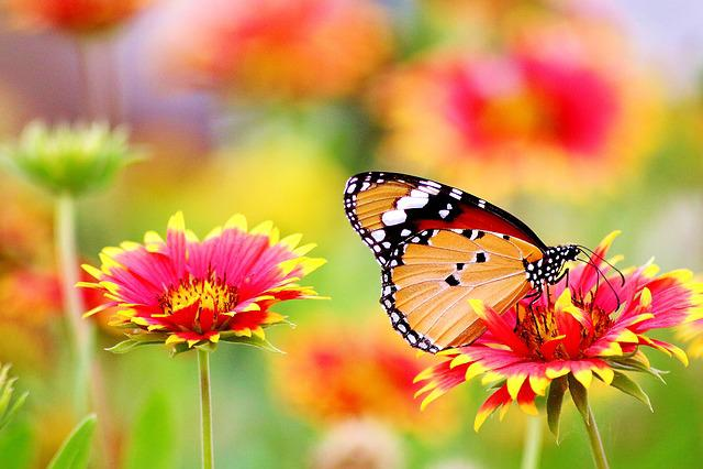 Flower, Red, Nature, Plant, Summer, Garden, Spring