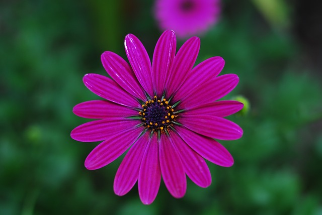 The Most Beautiful Flower, Nature, Plant, Summer