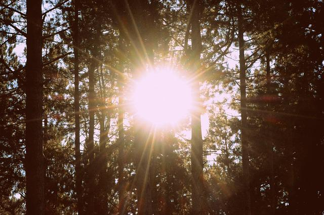 Trees, Forest, Nature, Sun Rays, Sun, Sunlight