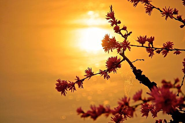 Sun, Sunset, Nature, Beauty, Flower, Water, Park