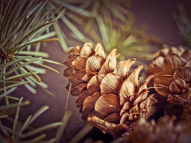 Pine Cones, Fir, Tap, Tree, Forest, Nature, Brown