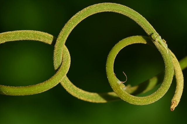 Spiral, Kringel, District, Nature, Plant, Tentacle