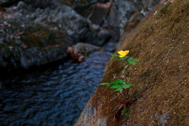 The Body Of Water, Nature, Valley, Wildflower