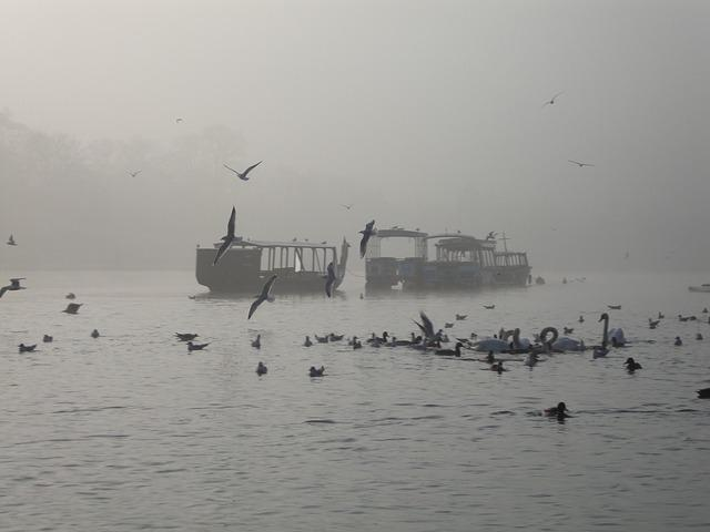 Water, The Fog, Birds, Landscape, Morning, Nature