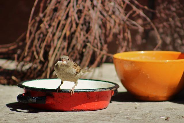 The Sparrow, Wróbelek, Bird, Birds, Nature, Pen