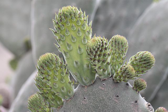Plant, Cactaceae, Nature, Thorny, Sewing Needle