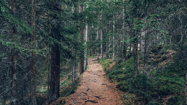 Forest, Nature, Outdoors, Path, Trail, Trees