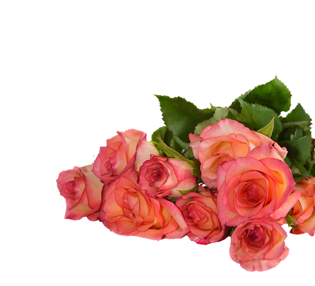 Rose, Flowers, Nature, Transparent Background