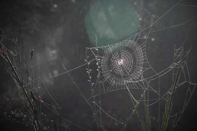Spider Web, Spiderweb, Arachnid, Nature, Trap, Web