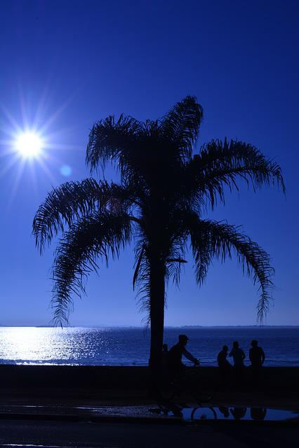 Tree, Sky, Against Light, Sunshine, Beautiful, Nature
