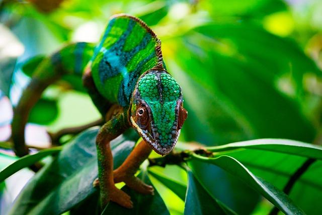 Nature, Leaf, Animal World, Animal, Tree, Tropical
