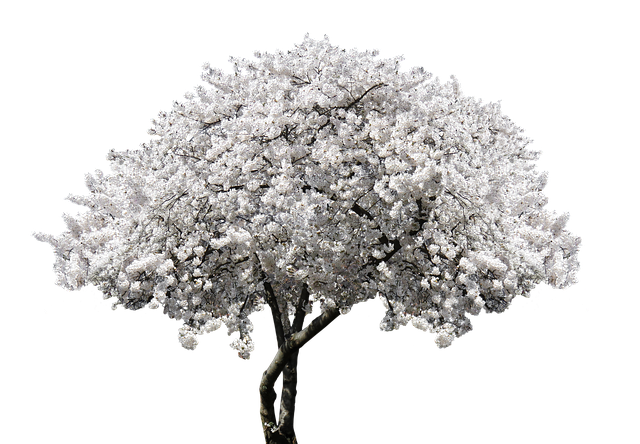 Nature, Tree, Blossom, Bloom, Cherry Tree, Blossom