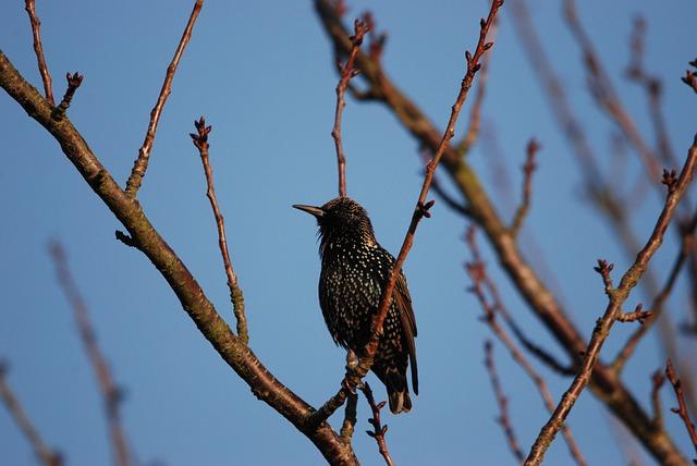 Nature, Bird, Starling, Black, Speckle, Tree Branch