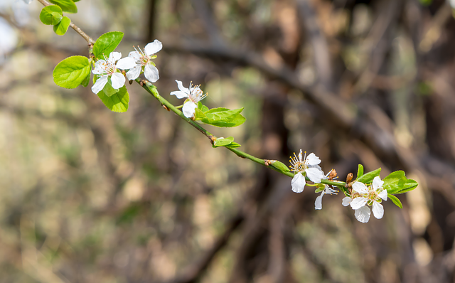 Flower, Nature, Plant, Tree, Growth, Blossom