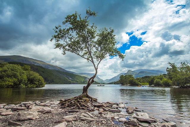 Tree, Lake, Nature, Snowdonia