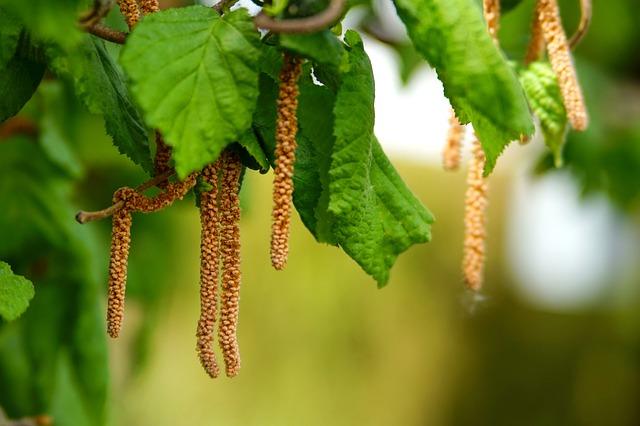 Leaf, Plant, Growth, Nature, Branch, Tree, Garden